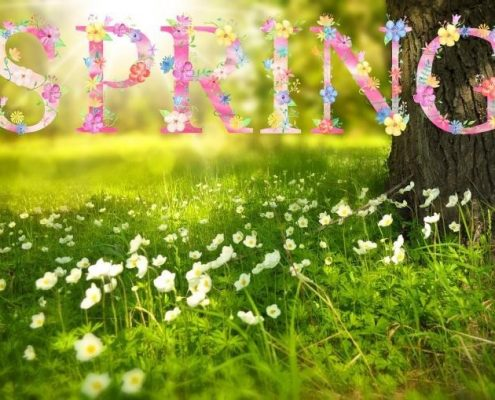 Spas in Leesburg, VA Invite You to Try These Great Spring Specials